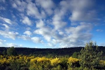 bloeiende brem in de vallei van de Kikbeek