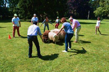 stiemerheide_incentives_schapen-drijven-2