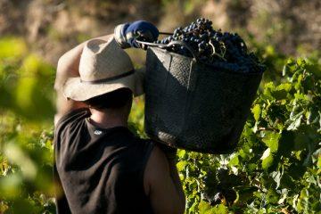 Het nieuwe gezicht van Spaanse wijnen